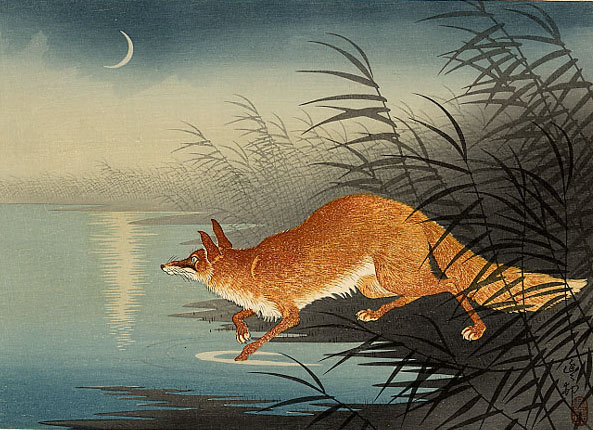Fox, hare, androoster